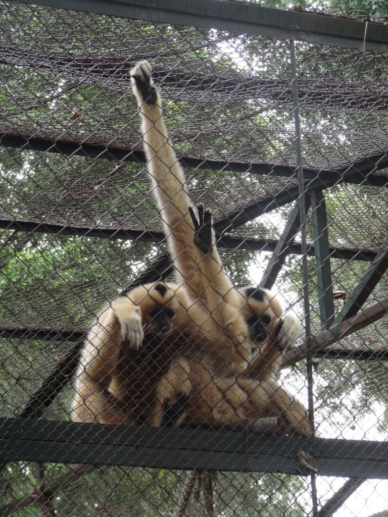 Hanoi Zoo Thu Le park